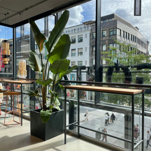 Transparenz und viel Tageslicht erlaubt Görtz die 6 m hohe Glasfassade des Kö-Bogens II.