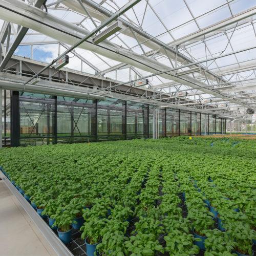 Die Basilikumfarm auf dem Dach versorgt rund 430 Märkte um Umkreis.