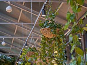 Details im Gartencenter Kremer in Lennestadt.